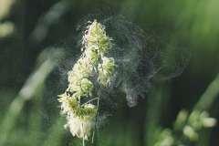 Alergia - zdjęcie partnera